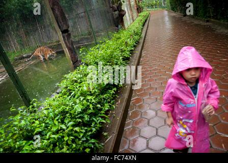 Una ragazzina in impermeabile passeggiate come ella pass tiger in gabbia Zoo. © Rinaldo Sumayku Foto Stock