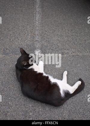 Elevato angolo di visione del gatto rilassante su strada Foto Stock