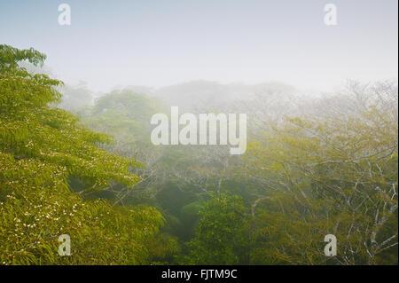 Misty rain forest all'alba nel parco nazionale di Soberania, Repubblica di Panama. Foto Stock