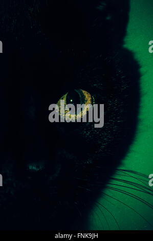 Black Cat Eye close up Foto Stock