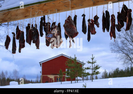Carne di renna essiccamento in una fattoria in Salla, Lapponia finlandese. La renna è una icona della Lapponia finlandese, Foto Stock