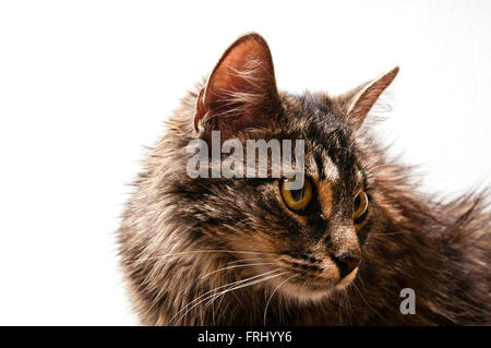 Cat face expression Foto Stock