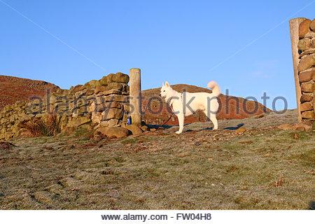 Holwick, Middleton in Teesdale, Co Durham, Regno Unito. Il 31 marzo 2016 una fredda mattina nel nord Pennine colline Foto Stock