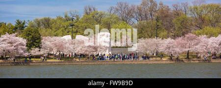 WASHINGTON, DC, Stati Uniti d'America - Martin Luther King Jr. Memorial e ciliegi in fiore Tidal Basin.