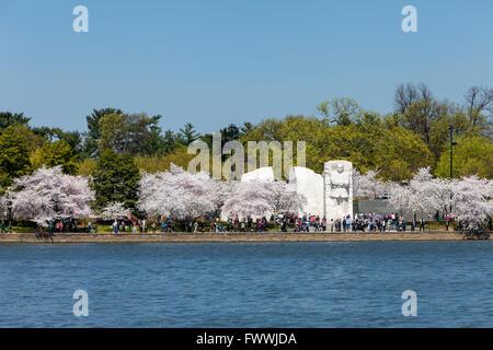 Washington D.C., fiori di ciliegio e Martin Luther King Jr. Memorial.