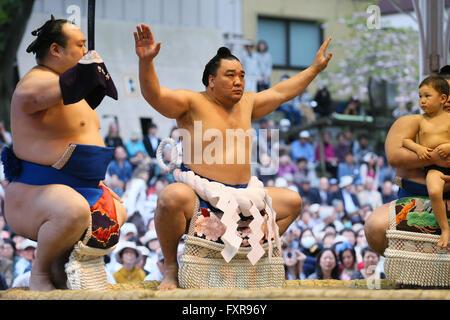 Tokyo Giappone. Xviii Apr, 2016. Harumafuji, Sumo : annuale torneo di sumo dedicata al Santuario Yasukuni a Tokyo Foto Stock