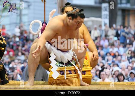 Tokyo Giappone. Xviii Apr, 2016. Hakuho, Sumo : annuale torneo di sumo dedicata al Santuario Yasukuni a Tokyo in Foto Stock