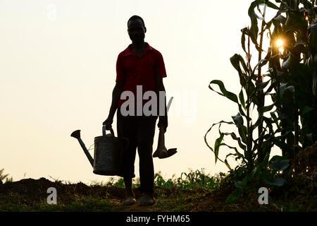 Il Malawi, Thyolo, irrigazione in villaggio Samuti, contadino con possibile e zappa accanto al campo di mais Foto Stock