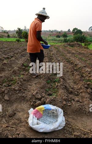 Il Malawi, Thyolo, villaggio Samuti, agricoltore applichi Fertilizzante sintetico in campo vegetale, il governo Foto Stock