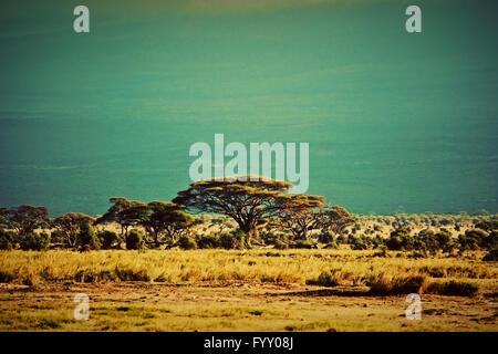 Savana paesaggio in Africa, Amboseli, Kenya Foto Stock