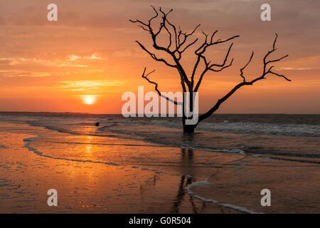 Il sole sorge su una solitaria dead Oak Tree sulla spiaggia di Botany Bay Plantation WMA sul Edisto Island, nella Carolina del Sud. Foto Stock