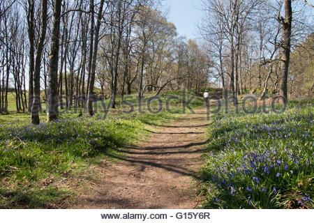 Holwick, Middleton in Teesdale, Co Durham, Regno Unito 9 maggio 2016 una calda e soleggiata giornata di primavera Foto Stock