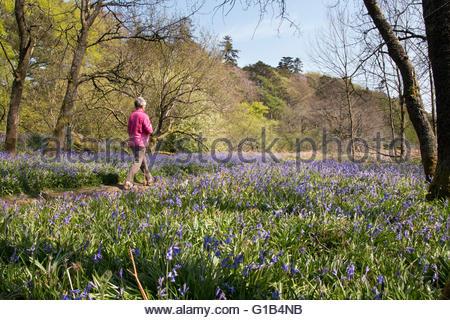 La Pennine Way, Holwick, Middleton in Teesdale, Co Durham, Regno Unito 12 maggio 2016 un grazioso luminoso giorno Foto Stock
