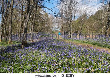 Holwick, Middleton in Teesdale, Co Durham, Regno Unito. 14 maggio 2016. Su un luminoso giorno chiaro nel nord Pennine Foto Stock