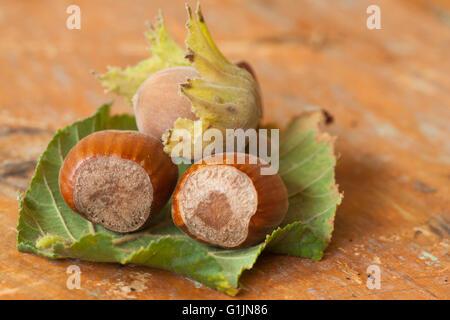 Le nocciole su un tavolo di legno Foto Stock