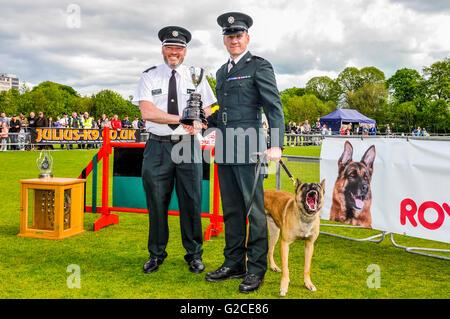 BELFAST, IRLANDA DEL NORD. 22 MAGGIO 2016 - PD Finn dalla PSNI, con il suo gestore di Constable Bradley, che si Foto Stock