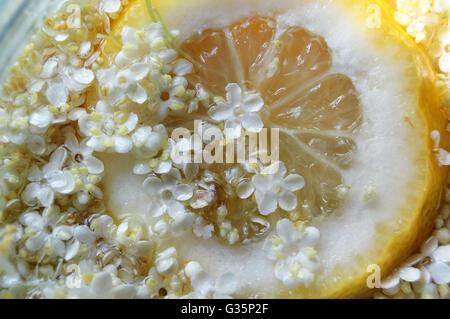 Fettina di limone con fiori di sambuco Foto Stock