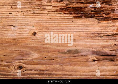In parte decomporsi, incrinato dettaglio di legname. Foto Stock