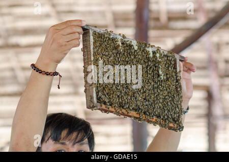 Il Vietnam, Can Tho, beehive nel Delta del Mekong Foto Stock
