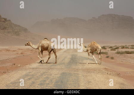 Una tempesta di sabbia nel paesaggio del Wadi Rum Desert in Giordania in medio oriente. Foto Stock