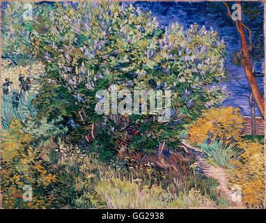 Vincent van Gogh scuola olandese Lilac Bush 1889 olio su tela (73 x 92 cm) di San Pietroburgo, Museo Hermitage Foto Stock