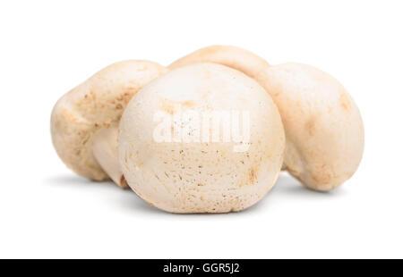 Funghi freschi champignon isolati su sfondo bianco Foto Stock