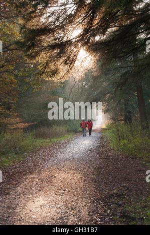 Raggi di luce del sole di autunno cadono attraverso gli alberi come un giovane a piedi lungo una pista di bosco Foto Stock