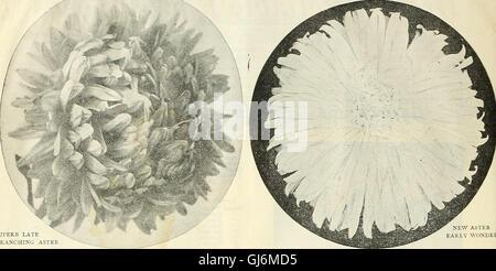 Dreer all'ingrosso Listino prezzi - semi per fioristi piante semi vegetali, attrezzi, fertilizzanti, Sundries, etc (1908) Foto Stock