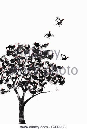 Stormo di uccelli arroccato nella struttura ad albero Foto Stock