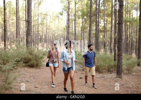 Giovani amici passeggiando attraverso il pino plantation nel tardo pomeriggio di sole indossando un abbigliamento casual