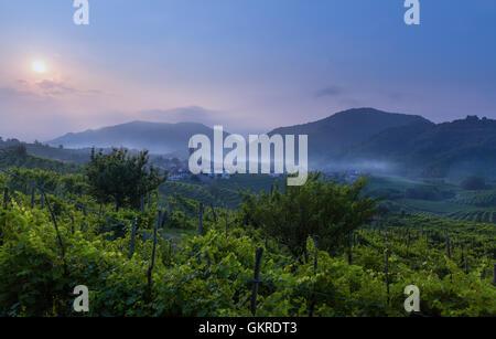 Alba sul vitigno prosecco campi a Guia, Valdobbiadene, Treviso, Veneto, Italia