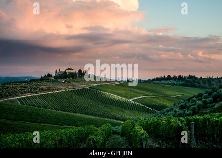 Guardare oltre il vigneto in Toscana al tramonto