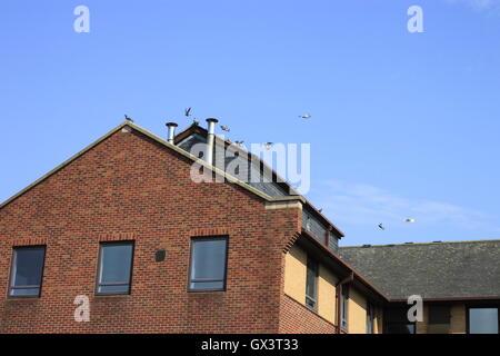Piccioni volteggiare e lo sbarco su ufficio moderno edificio contro un cielo blu. Foto Stock