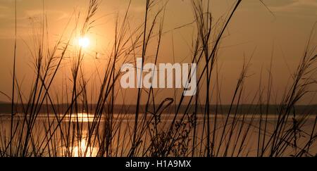 Impostazione sole affonda in un lago come la luce del sole che filtra attraverso la crescita selvaggia erbacce e Foto Stock