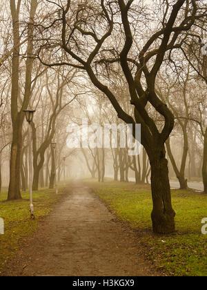 Corsia in mattinata nebbiosa park con lampione e alberi ai lati in autunno Foto Stock