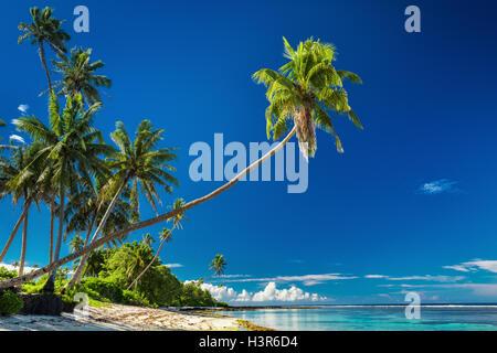 Tropical Beach sul lato sud di Samoa Isola con palme di cocco