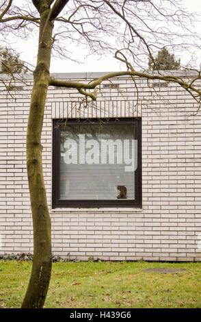 Bungalow, finestra, veneziana, albero, calvo, house, casa residenziale, edificio esterno, finestra chiusa e sigillata, Foto Stock