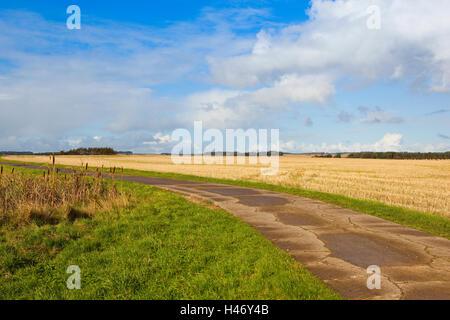 Giunchi in un stagno inglese foto immagine stock for Piccolo stagno
