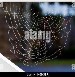 La rugiada laden spider web; Omni Bedford Springs Resort & Spa; Bedford; Pennsylvania; USA Foto Stock