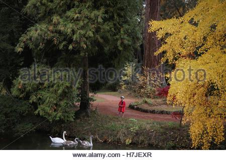 Incantata foresta d'autunno. Cigni e bambina in rosso cappotto. Foto Stock