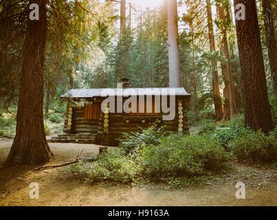 Una cabina nella foresta Foto Stock