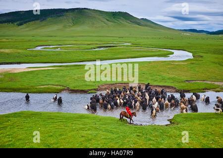Mongolia, provincia Arkhangai, mongola horserider con una mandria di yak Foto Stock