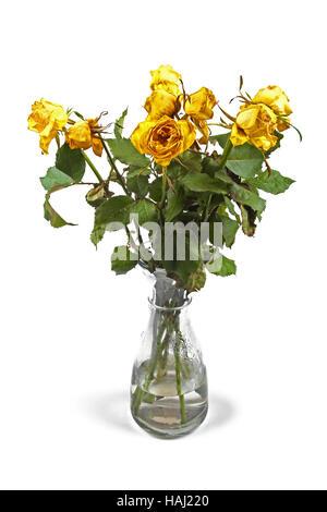 Rose appassite in vaso isolato su bianco