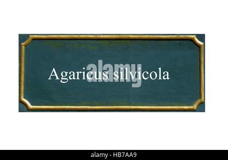 Scudo funghi Agaricus silvicola Foto Stock