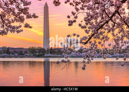 Washington DC, Stati Uniti d'America presso il bacino di marea con il Monumento a Washington nella stagione primaverile. Foto Stock