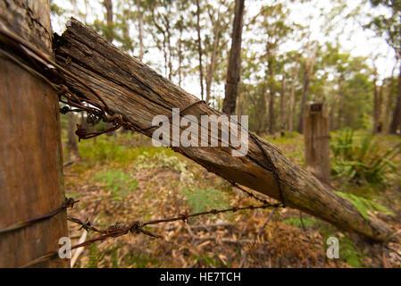 Un vecchio recinto rotto e filo spinato nel bush australiano Foto Stock