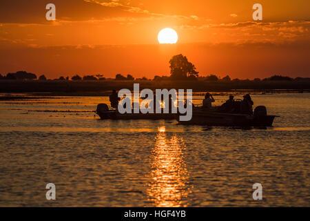 I turisti in barca safari guardando un elefante al tramonto, fiume Chobe, Chobe National Park, Botswana Foto Stock