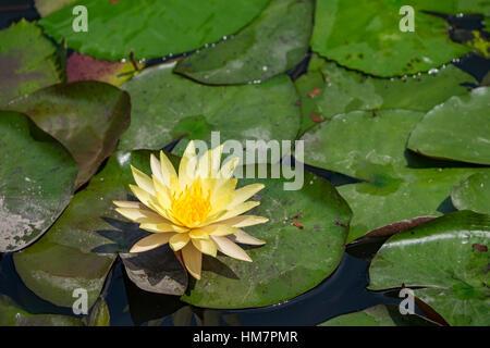 Carta Da Parati Fiori Di Loto : Carta da parati floreale con lotus pattern in sfumature di colore