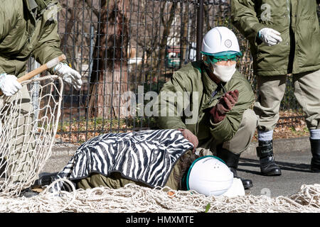 Tokyo, Giappone. 7 febbraio, 2017. I custodi del giardino zoologico una guardia personale ferito durante un animale Foto Stock