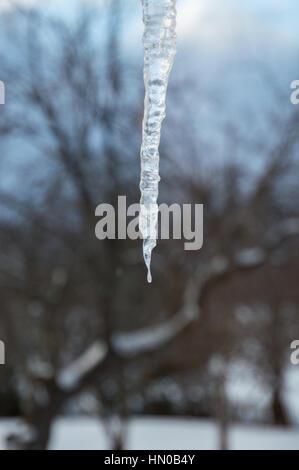 Primo piano di un ghiacciolo frizzante contro le nuvole nere e una coperta di neve melo Foto Stock